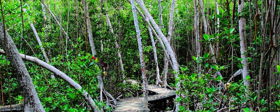 La Giungla Amazzonica Per 249