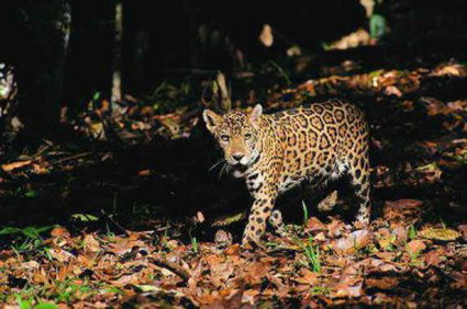 Il principe dell 39 amazzonia paese che vai animale che trovi - Gli animali della foresta pluviale di daintree ...